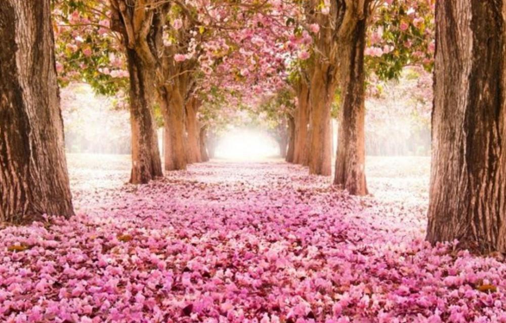 19.04.13桜
